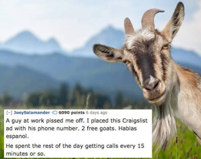 Goats - [] JoeySalamander 6090 points 6 days ago A guy at work pissed me off. I placed this Craigslist ad with his phone number. 2 free goats. Hablas espanol. He spent the rest of the day getting calls every 15 minutes or so.