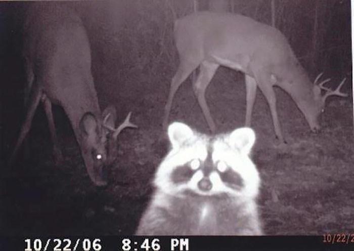 Mammal - 10/22/2 10/22/06 8:46 PM