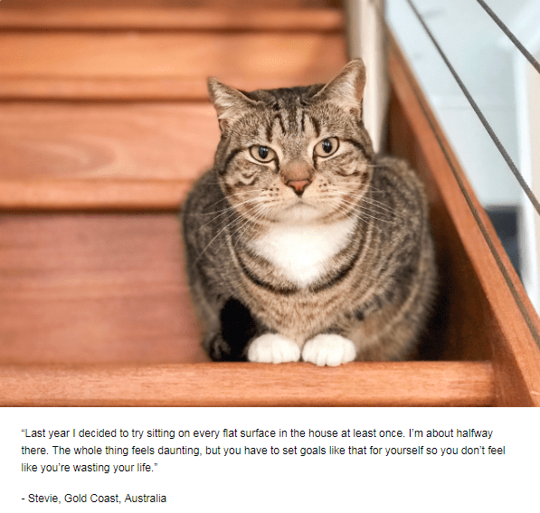 """Cat - """"Last year I decided to try sitting on every flat surface in the house at least once. I'm about halfway there. The whole thing feels daunting, but you have to set goals like that for yourself so you don't feel like you're wasting your life."""" - Stevie, Gold Coast, Australia"""