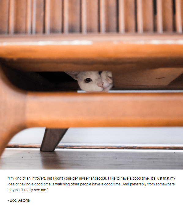 """Wood - """"I'm kind of an introvert, but I don't consider myself antisocial. I like to have a good time. It's just that my idea of having a good time is watching other people have a good time. And preferably from somewhere they can't really see me. - Boo, Astoria"""