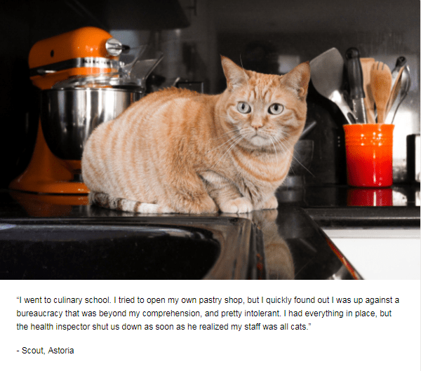"""Cat - """"I went to culinary school. I tried to open my own pastry shop, but I quickly found out I was up against a bureaucracy that was beyond my comprehension, and pretty intolerant. I had everything in place, but the health inspector shut us down as soon as he realized my staff was all cats."""" -Scout, Astoria"""