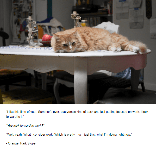 """Cat - """"I like this time of year. Summer's over, everyone's kind of back and just getting focused on work. I look forward to it."""" """"You look forward to work? """"Well, yeah. What I consider work. Which is pretty much just this, what I'm doing right now. - Orange, Park Slope"""