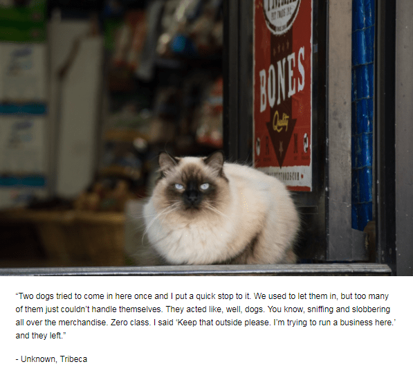 """Cat - BOKES DSCO """"Two dogs tried to come in here once and I put a quick stop to it. We used to let them in, but too many of them just couldn't handle themselves. They acted like, well, dogs. You know, sniffing and slobbering all over the merchandise. Zero class. I said 'Keep that outside please. I'm trying to run a business here."""" and they left. - Unknown, Tribeca"""