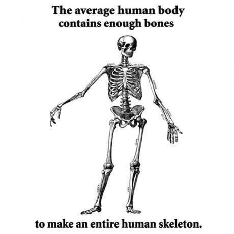skeleton meme - Skeleton - The average human body contains enough bones to make an entire human skeleton
