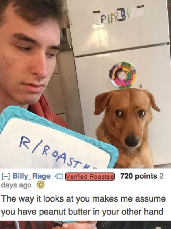 Dog - PIERBP R/ROAST 720 points 2 H Billy_Rage days ago Verified Roastee The way it looks at you makes me assume you have peanut butter in your other hand