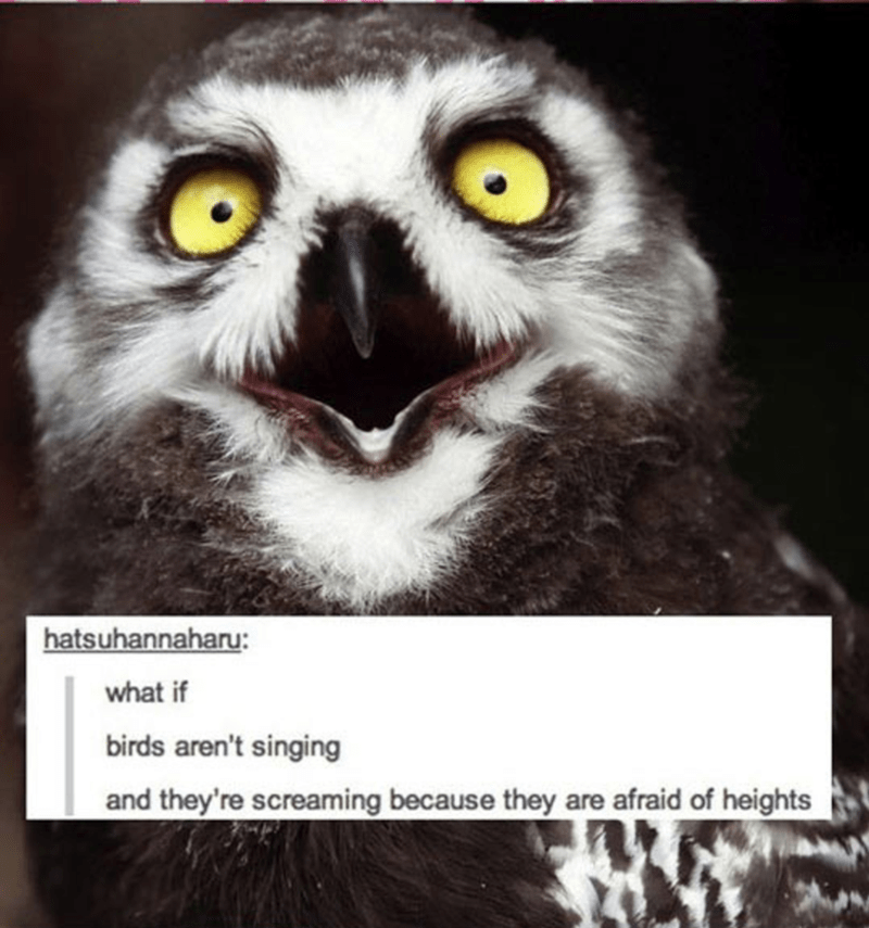 Owl - hatsuhannaharu what if birds aren't singing and they're screaming because they are afraid of heights
