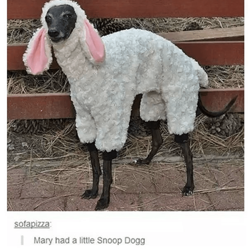 Dog that looks like snoop dog dressed up as Mary the lamb.