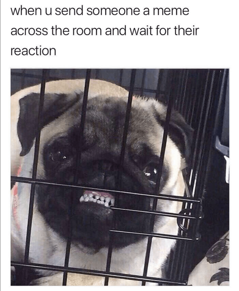 Pug meme about the feeling of sending someone a meme across the room and waiting for their reaction
