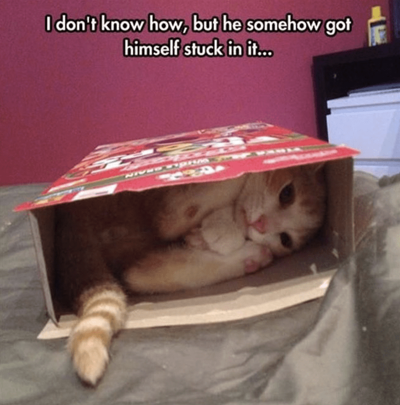 cat that somehow got stuck in a cereal box