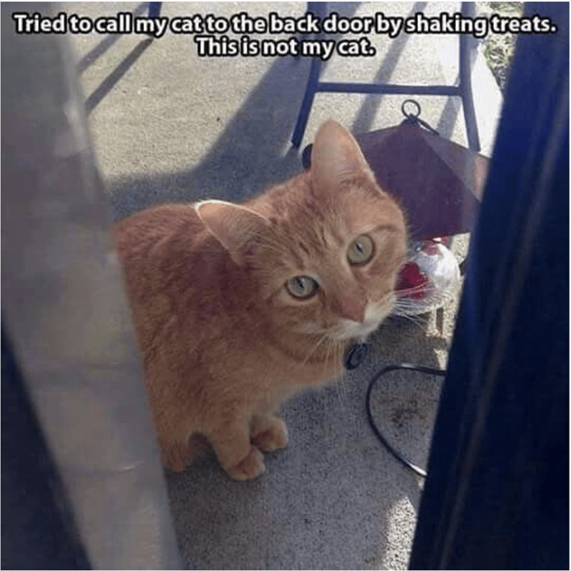 Meme of someone who was trying to get his cat back by shaking treats and another cat showed up