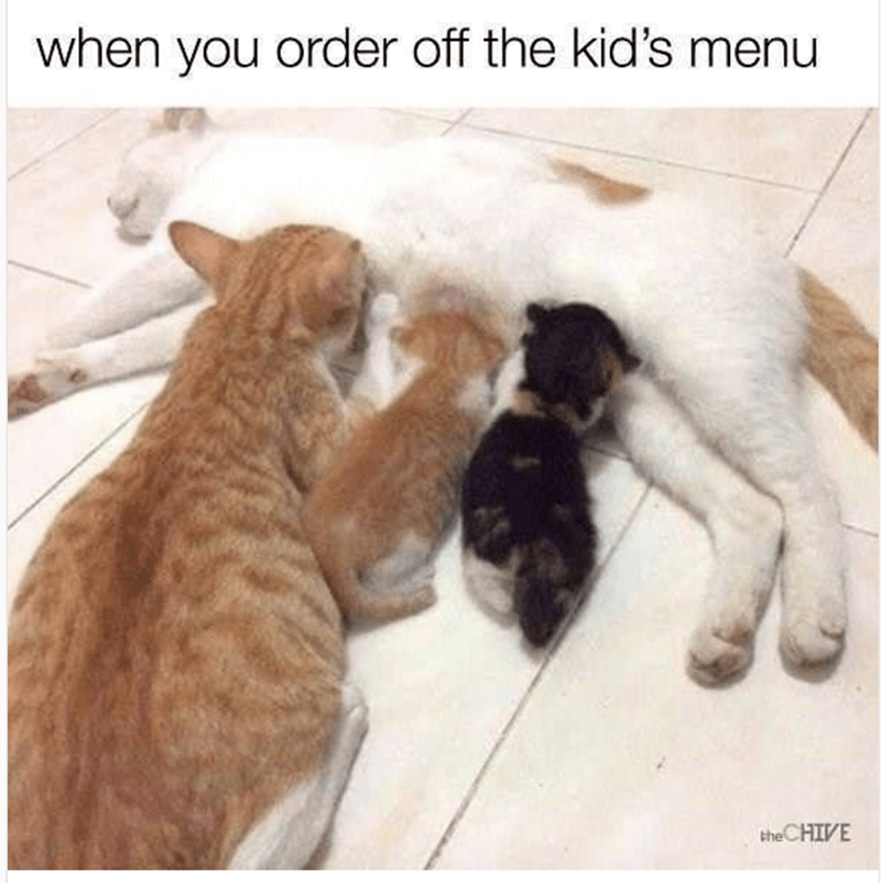 Meme about ordering off the kids menu with pic of kittens feeding off momma cat and one is a full grown cat