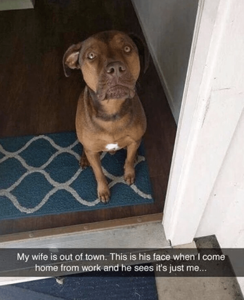 Snapchat of dogs face when he realizes wife is not coming today