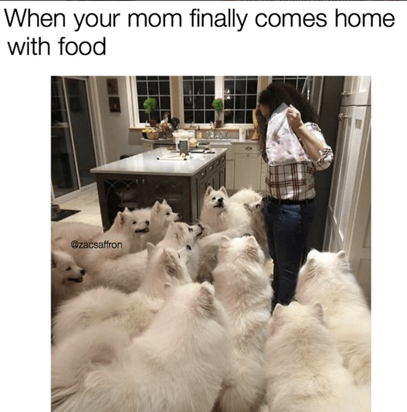 Meme of a bunch of huskies around 1 woman, with caption about how it feels when mom finally comes home with food