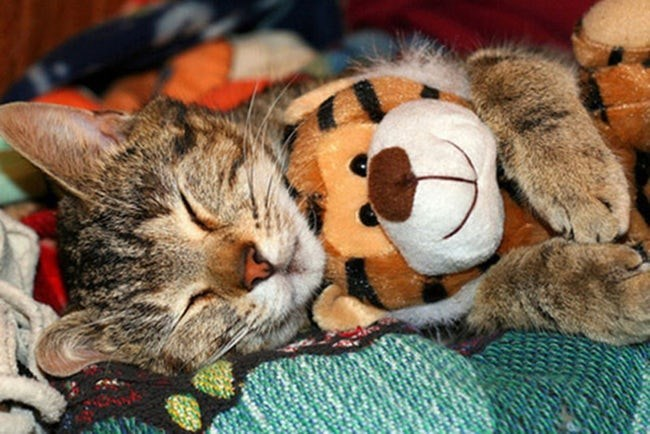 animals with toys - Cat