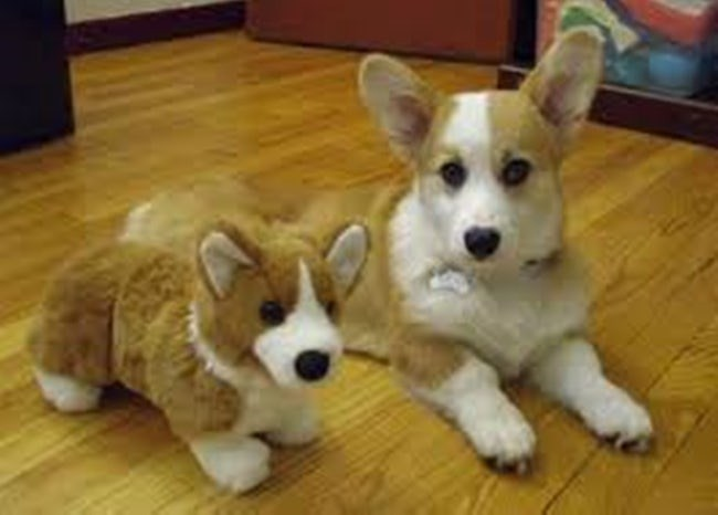 animals with toys - Dog