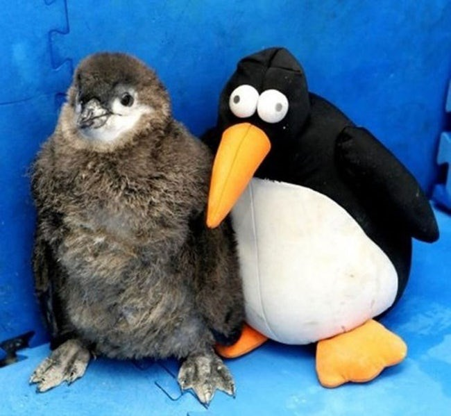 animals with toys - Bird