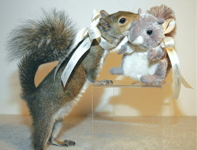 animals with toys - Squirrel