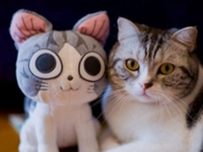 animals with toys - Cat - O.O