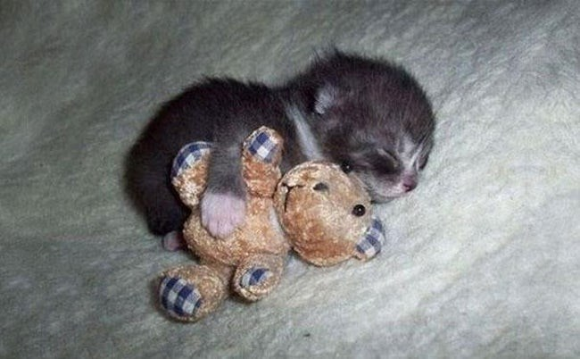 animals with toys - Puppy