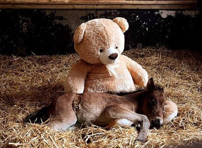 animals with toys - Teddy bear