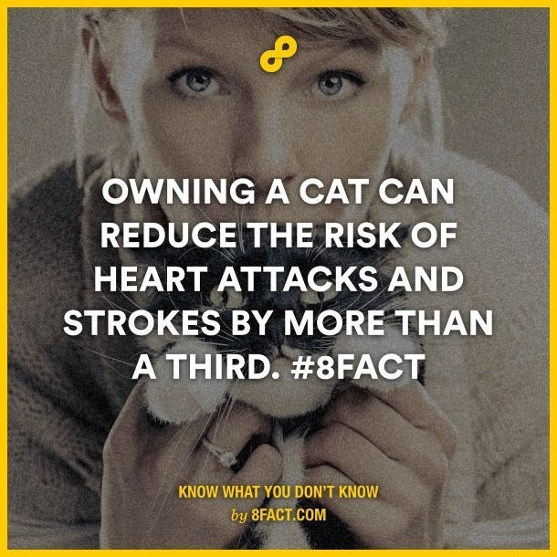 Text - OWNING A CAT CAN REDUCE THE RISK OF HEART ATTACKS AND STROKES BY MORE THAN A THIRD. #8FACT KNOW WHAT YOU DON'T KNOW by 8FACT.COM