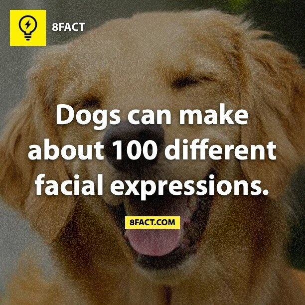Dog - 8FACT Dogs can make about 100 different facial expressions. 8FACT.COM