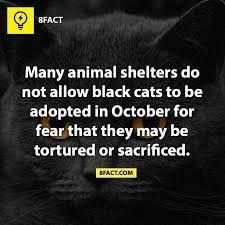 Text - 8FACT Many animal shelters do not allow black cats to be adopted in October for fear that they may be tortured or sacrificed. BACTCOM