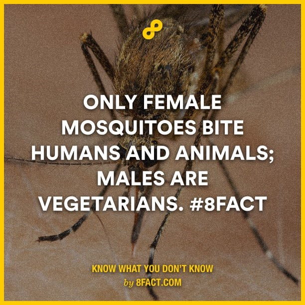 Adaptation - ONLY FΕMALE MOSQUITOES BITE HUMANS AND ANIMALS; MALES ARE VEGETARIANS. #8FACT KNOW WHAT YOU DON'T KNOW by 8FACT.COM