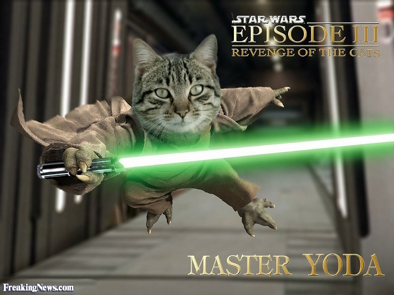 Cat - STARWARS EPISODE I REVENGE OF THE OATS MASTER YODA FreakingNews.com