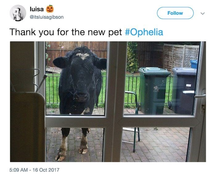 Product - luisa Follow @itsluisagibson Thank you for the new pet #Ophelia 5:09 AM 16 Oct 2017 ATALK
