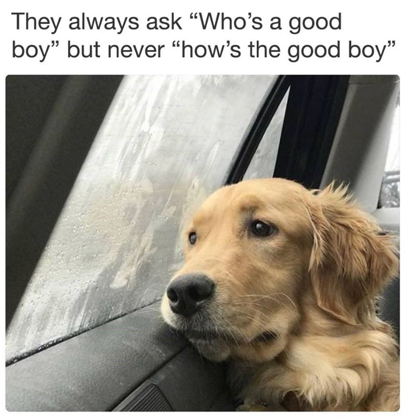 Funny meme about people asking who is a good boy instead of how is a good boy.