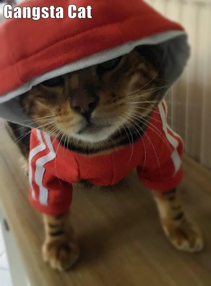 funny cat memes cat gangsta hoodie - 9087794176