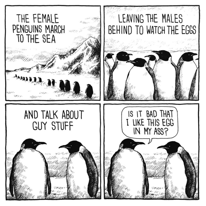 Flightless bird - THE FEMALE PENGUINS MARCH TO THE SEA LEAVING THE MALES BEHIND TO WATCH THE EGGS AND TALK ABOUT GUY STUFF IS IT BAD THAT I LIKE THIS ECG IN MY ASS? ntypt tUyper