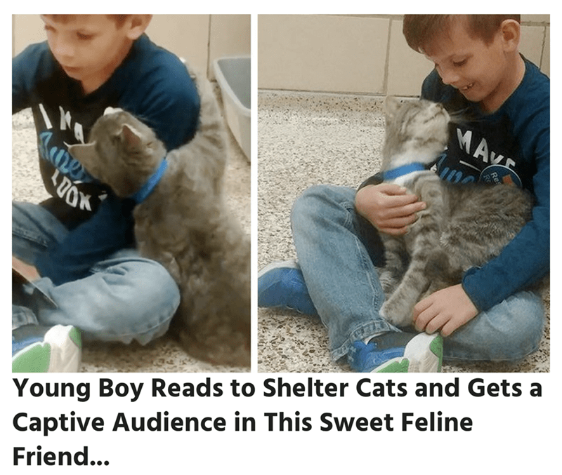 Puppy - MAyr Young Boy Reads to Shelter Cats and Gets a Captive Audience in This Sweet Feline Friend...