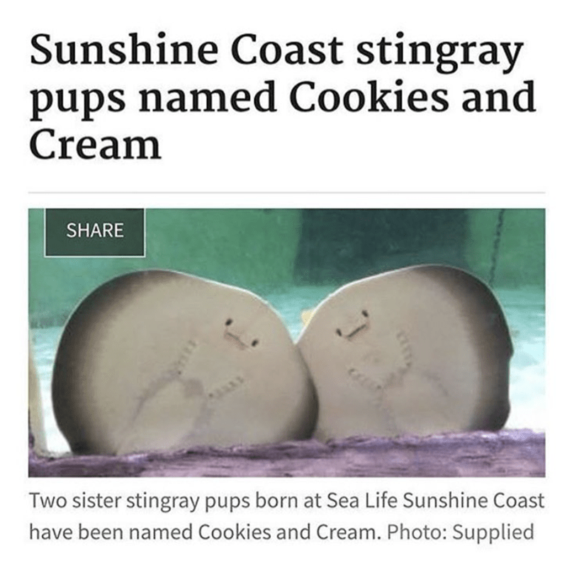 Organism - Sunshine Coast stingray pups named Cookies and Cream SHARE Two sister stingray pups born at Sea Life Sunshine Coast have been named Cookies and Cream. Photo: Supplied