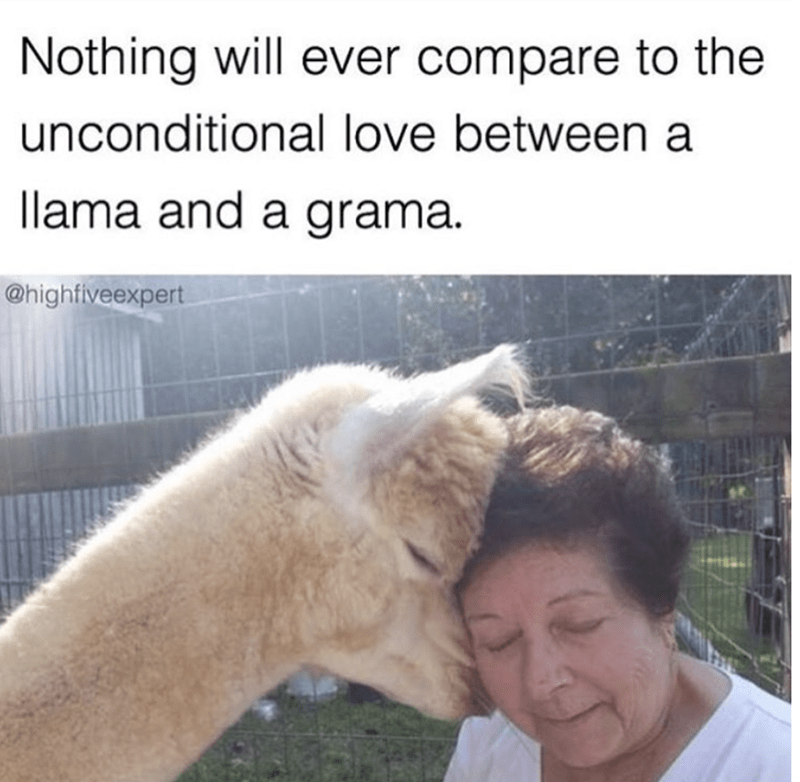 Horse - Nothing will ever compare to the unconditional love between a llama and a grama @highfiveexpert