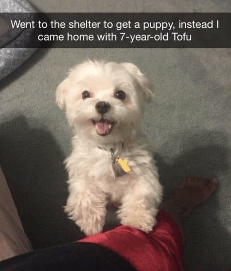 Dog - Went to the shelter to get a puppy, instead I came home with 7-year-old Tofu