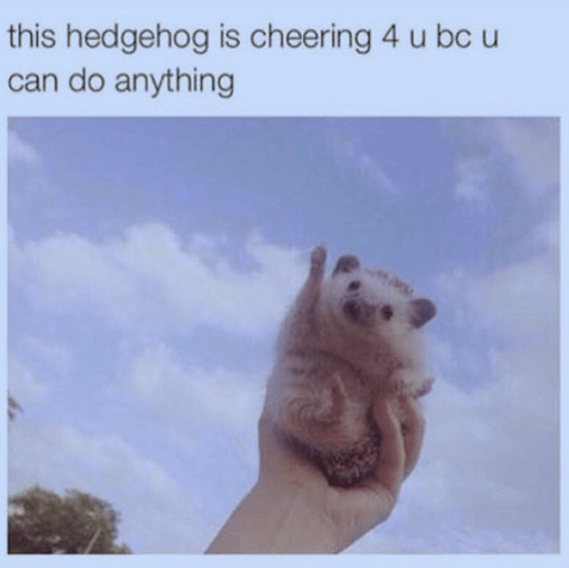 Adaptation - this hedgehog is cheering 4 u bc can do anything