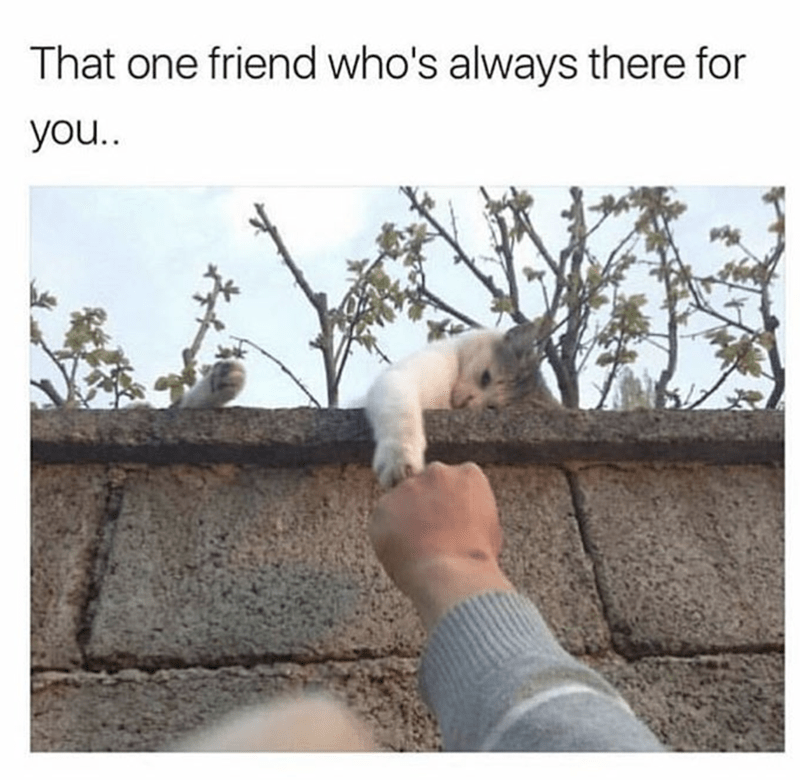 Adaptation - That one friend who's always there for you..