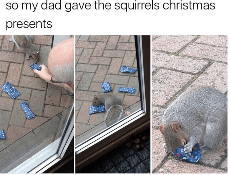 Adaptation - so my dad gave the squirrels christmas presents