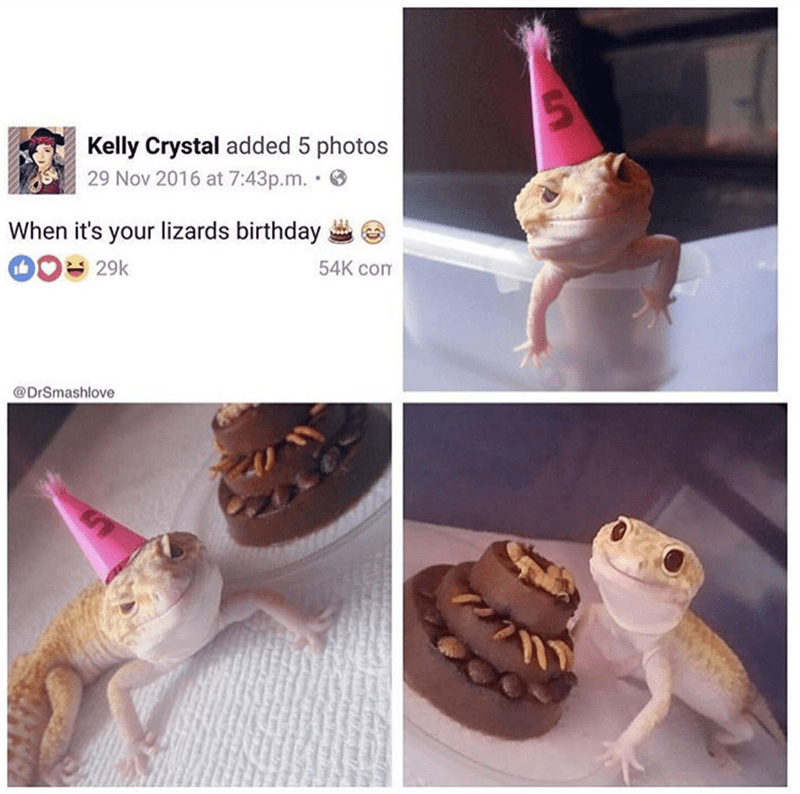 Amphibian - Kelly Crystal added 5 photos 29 Nov 2016 at 7:43p.m. . When it's your lizards birthday 029k 54K com @DrSmashlove