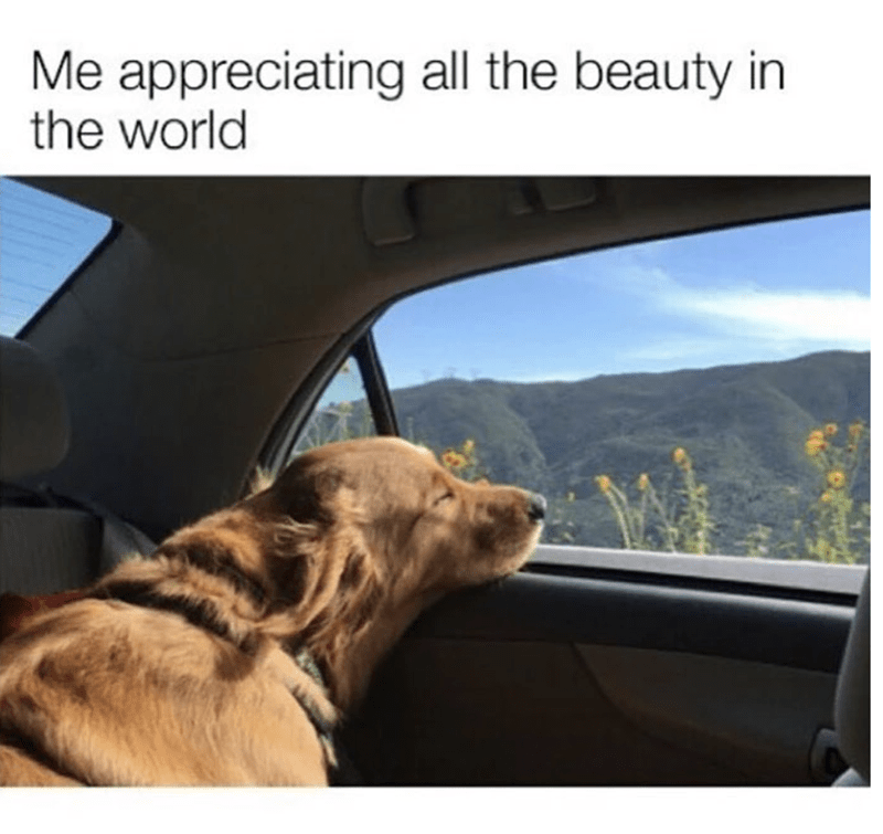 Product - Me appreciating all the beauty in the world
