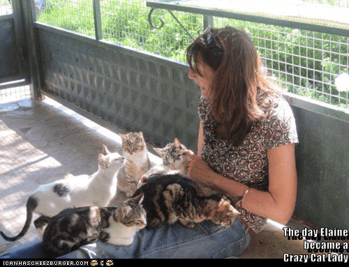 crazy crazy cat lady cat meme cat lady funny cats - 9088315648