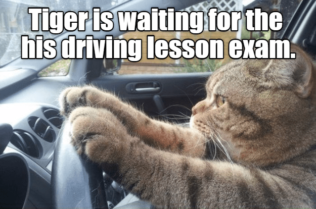 cat meme driving test - 9088391680