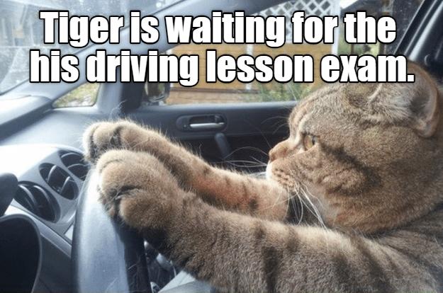 cat meme driving test - 9088391680