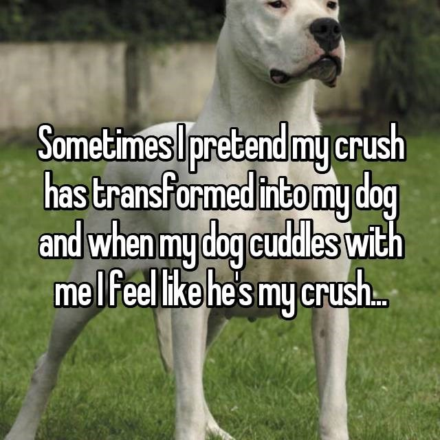 Mammal - Sometimes Ipretend mycrush has transformed intomy dog and when my dog cudles with melfeel like he's my crush..