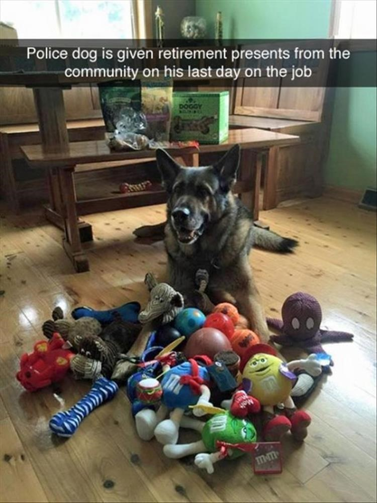Canidae - Police dog is given retirement presents from the community on his last day on the job DOGGY