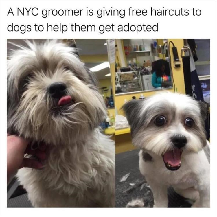 Dog - A NYC groomer is giving free haircuts to dogs to help them get adopted
