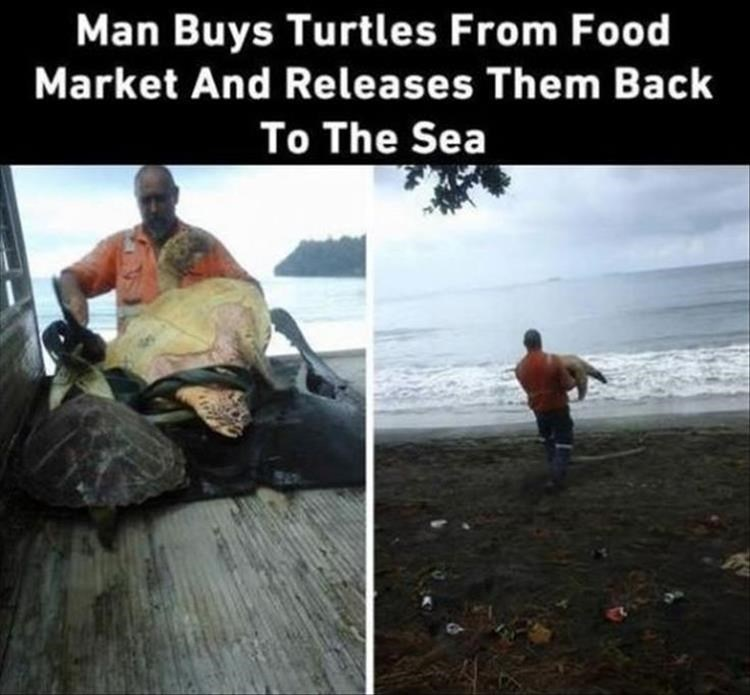 Sea turtle - Man Buys Turtles From Food Market And Re leases Them Back To The Sea