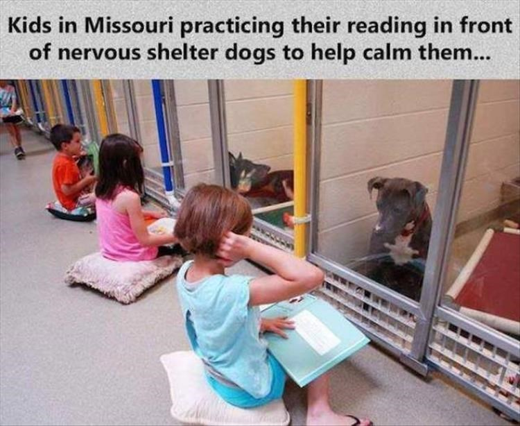 Child - Kids in Missouri practicing their reading in front of nervous shelter dogs to help calm them...